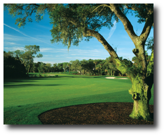 Turtle Point Golf Course 9th Hole